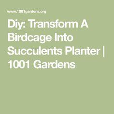 Diy: Transform A Birdcage Into Succulents Planter   1001 Gardens