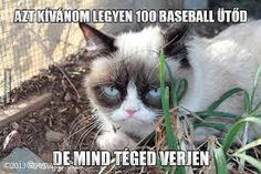 Browse the best of our 'Grumpy Cat' image gallery and vote for your favorite! Grumpy Cat Images, Grumpy Cat Meme, Cat Memes, Haha, Jokes, Gallery, Funny, Minden, Animals