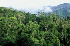 The United Nations' Educational, Scientific, and Cultural Organisation (UNESCO) has placed the Atsinanana Rainforest in Madagascar on its list of World Heritage in Danger sites because of an ongoing government-influenced illegal logging crisis and continuing lemur bush meat consumption in some of the national parks that are part of the forest. Photo credit: © Edward Parker / WWF-Canon | http://www.wwf.mg/wherewework/ecoregions/rainforest/