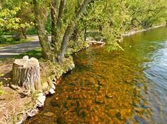 Der Tegeler See | Nindë Anwamanës Fotoblog