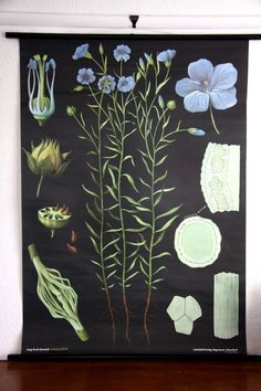 Flax Botanical Wall Chart design by Empirical Style