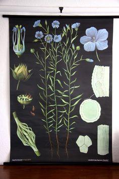Flax Botanical Wall Chart design by Empirical Style
