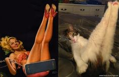 Pin up cats!!