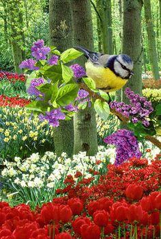 En esta ocasión quiero compartir contigo esta bonita imagen animada de un ave en un jardín de flores. Esta imagen gif de un ave la puedes bajar gratis a tu celular o computador y enviarla por whats…