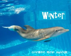 winter the dolphin pictures | The Glam Green Girl: Dolphin Tale: Winter