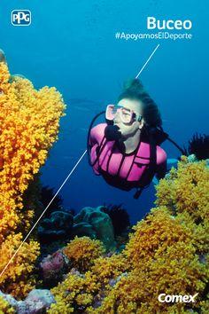 Adéntrate en un mundo lleno de color y disfruta de las maravillas submarinas.   #ApoyamosElDeporte #Comex #ComexLATAM #Colorful#Buceo #Sports #Wonderful #Maravillas #Colores #Submarino #Oceano #Deporte