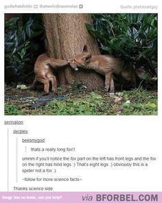 Long Fox…