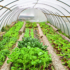 Organic Gardening - Tending a Greenhouse Greenhouse gardening has its own set of considerations.