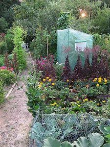 Légumes et fleurs Plants, Gardening, Gardens, Lawn And Garden, Plant, Planets, Horticulture