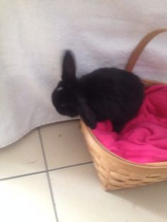 . Plastic Laundry Basket, Bunny, Decor, Cute Bunny, Decoration, Rabbit, Decorating, Rabbits, Deco
