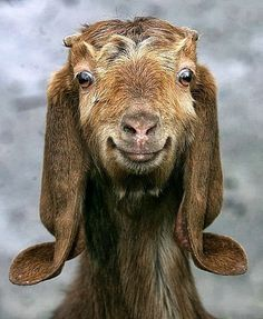 funny animal faces - Google Search