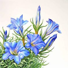 Sue Linton | The Society of Botanical Artists