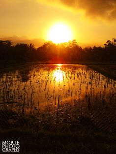 watch the sunset in the evening with a beautiful view of the rice fields are still very pleasing can do all of this.