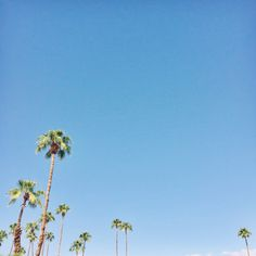 Blue skies + palm trees… what fall looks like in Los Angeles