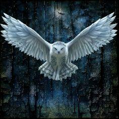 Multimedia by Wesley Lawson Owl Photos, Owl Pictures, Nature Pictures, Owl Bird, Bird Art, Pet Birds, Beautiful Owl, Animals Beautiful, Bird Drawings