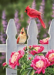 350 Pieces Jigsaw Puzzle Northern Cardinals on a Fence