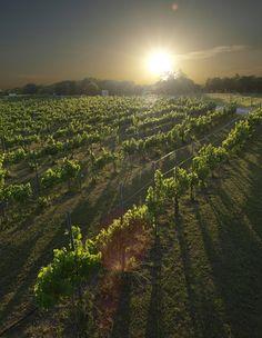 Brushy Creek Vineyards, north of Fort Worth