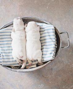 sleepy pups//