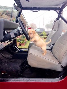 You do know this is MY Jeep......right? But since I love my human I'll let you ride in it with me!