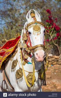 Portrait of dominant white dancing horse, elaborately … – Dres… Marwari Horse. Portrait of dominant white dancing horse, elaborately … – Dressage horses – Marwari Horses, Dressage Horses, Horse Tack, Beautiful Arabian Horses, Horse Costumes, Horse Gear, Horse Portrait, American Indian Art, White Horses