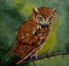 'Eastern Screech Owl on Pine Branch' by Sandra Maddox of Your Design