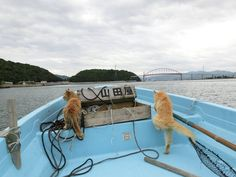 Working cats at fishing vessel in Yamaguchi city, Japan