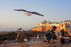 De foto is genomen in Essaouira, aan de Atlantische kust van Marokko, in mei 2011. Het is tegen zonsondergang. In de haven van Essaouira is de vis binnen gebracht en schoongemaakt. Dit trekt de aandacht van de vele meeuwen die in de buurt rondvliegen, in de hoop een stukje vis te kunnen verschalken. Door communitylid Lione1 - NG ReisCommunity © Upload zelf je mooiste foto's op www.nationalgeographic.nl/reizen/fotos/toevoegen