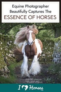 If you've got a soft spot for the Gypsy Cob, you will love these equine photographs. Rachel Flynn is a master of horse photography, truly capturing the essence of these beautiful creatures. | #horsephotography #ihearthorses #horsebreeds #gypsycob