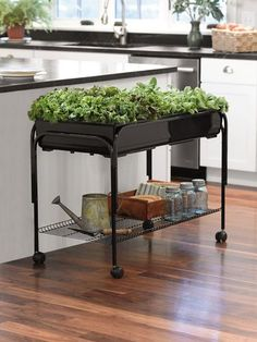Mobile Grow Cart - to transition in/outdoor gardening!