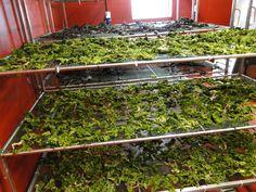 seaweed drying rack - Google Search