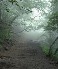 Aokigahara is one of the most famous and haunted forests in the world. It is a place where many come to die and others were reluctantly sent to die. #japan #haunted https://www.amazon.com/Ghost-Hunters-Guide-Haunted-Places-ebook/dp/B078ZL382D/ref=asap_bc?ie=UTF8