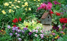 Cum crestem flori din seminte-Sfaturi practice - http://decodellacasa.ro/cum-crestem-flori-din-seminte-sfaturi-practice/
