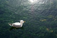 seagull, Gemlik, Turkey