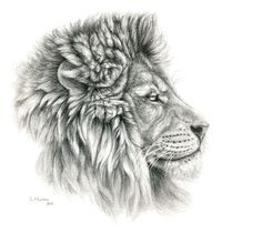 "Lion - profile by S-Schukina ART PRINT / MINI (9"" X 8"") $22.88"