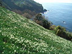 地区別花暦 詳細  | ふくいの花・花の見ごろなら福井県が運営する - ふくい花みごろ