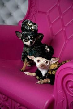 8170d62e70e48 Celebripups   Couture Dogs of New York Bogie and Kimba strike a pose wearing  Faux Fur trimmed Russian inspired coats with matching jeweled Faux Fur hats  by ...