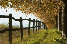 farm fence by rowteight on flickr