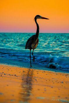 Beach on Gulf of Mexico