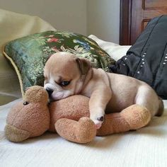 Some of them are smaller than the stuffed animals they are cuddling.