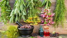 5 Most Essential Healing Herbs for a Healing Garden – Gardening Steps Healing Herbs, Medicinal Plants, Natural Healing, Natural Herbs, Natural Birth, Natural Beauty, Organic Gardening, Gardening Tips, Indoor Gardening