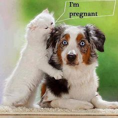 Funny pictures of the day -  I'm Pregnant