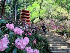 12 Nara's Temples and Shrines Flourishing with Vernal Flowers | tsunagu Japan