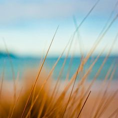 Looking out from within the sand dunes!    Photography beach  nautical decor Fine art photography