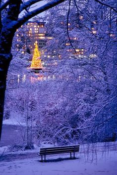 Christmas in Stanley Park, Vancouver. Looking forward to a white christmas this year :)