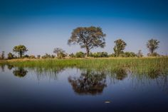 Tree reflection on the water of the delta. Bush Camping in the Okavango Delta in Botswana Read the full post at http://www.divergenttravelers.com/bush-camping-okavango-delta-botswana/
