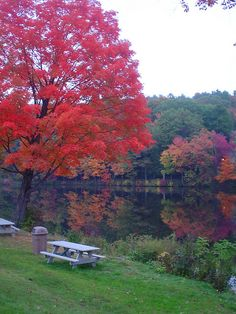 autumn leaves on Lower Lake, Mount Holyoke campus. So many picnics on that grass.