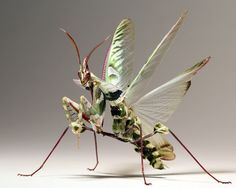Idolomantis Diabolica Revving Up For Takeoff  By: Scott Cromwell   Equipment: Canon EOS 7D