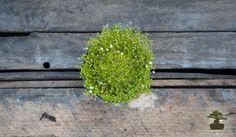 Mini ogród - własny raj w miniaturze cz. 2