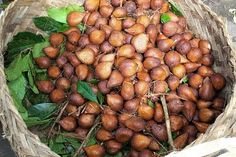 Salak-native to Indonesia, grows at the base of a short palm tree, it has 3-4 segments that are quite dry and crunchy and tangy