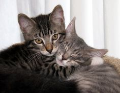 Squeeze Hug | The 25 Most Important Kitten Hugging Techniques